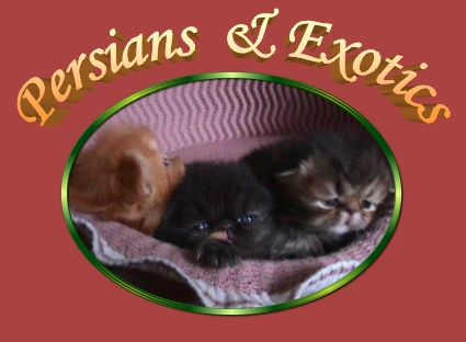 Persians & Exotics